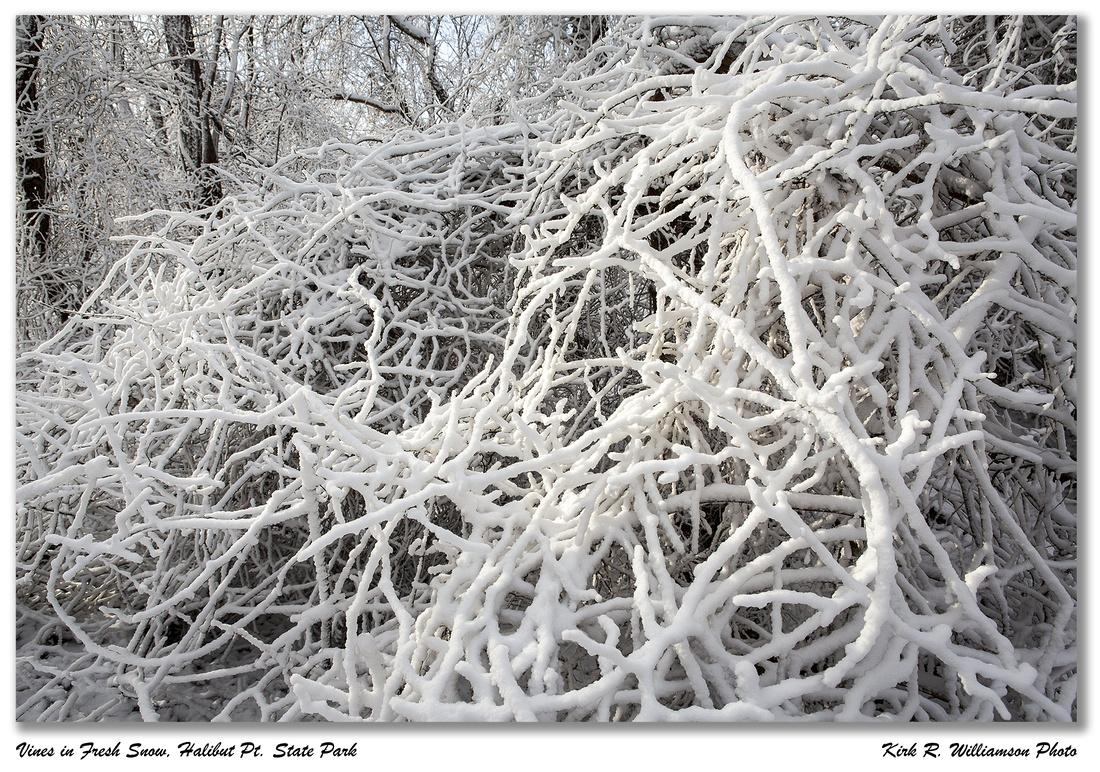 Snow on Vines