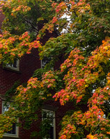 Fall colors in Marblehead