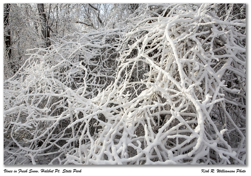 Snow on Vines